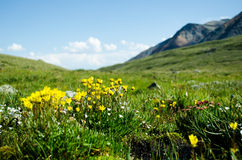 Γεμισμένα λιβάδι λουλούδια βουνών στοκ φωτογραφίες