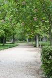 γεμισμένη πράσινη διάβαση π&epsi Στοκ Εικόνες