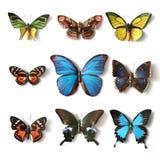 Γεμισμένη συλλογή πεταλούδων εντόμων Στοκ Εικόνες