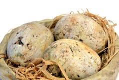 Γεμισμένη φωλιά πουλιών με τα αυγά Στοκ Φωτογραφίες