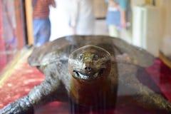 γεμισμένη hoan χελώνα kiem Στοκ φωτογραφίες με δικαίωμα ελεύθερης χρήσης
