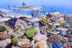 Γεμισμένοι καρχαρίας και κοράλλια Στοκ Εικόνα