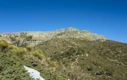 Γεμισμένο brushwood: Κοινό subsp ιοuνίπερος alpina και oromediterraneus Cytisus Στοκ Εικόνες