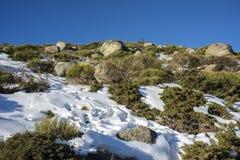 Γεμισμένο brushwood: Κοινό subsp ιοuνίπερος alpina και oromediterraneus Cytisus Στοκ φωτογραφίες με δικαίωμα ελεύθερης χρήσης