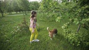 Γενεαλογικό παιχνίδι λαγωνικών σκυλιών σύλληψης μικρών κοριτσιών υπαίθριο Πυροβοληθείς με το stedicam απόθεμα βίντεο