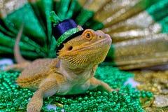 Γενειοφόρος δράκος που γιορτάζει την ημέρα του ST Πάτρικ ` s στοκ εικόνα
