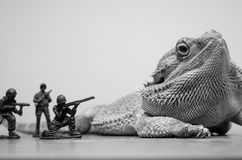Γενειοφόρος δεινόσαυρος τεράτων δράκων στοκ φωτογραφίες