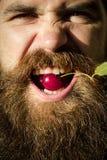 Γενειοφόρο άτομο με το κόκκινο κεράσι Στοκ Φωτογραφίες