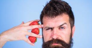 Γενειοφόρο χέρι λαβής hipster ατόμων με τις φράουλες κοντά στο πρόσωπο Το άτομο δεν μπορεί να σκεφτεί για το μπλε τίποτα αλλά φρα στοκ εικόνες