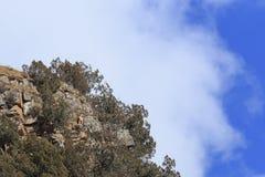 Γενειοφόρο barbatus Gypaetus γύπων γνωστό επίσης ως Lammergeier ή γενειοφόρος γύπας σε έναν απότομο βράχο στην Κίνα Στοκ εικόνες με δικαίωμα ελεύθερης χρήσης