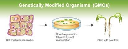 Γενετικά τροποποιημένοι οργανισμοί διανυσματική απεικόνιση