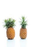 Γενετική τροποποίηση, ανανάς, φρούτα, τροποποίηση, παράξενη, s Στοκ εικόνες με δικαίωμα ελεύθερης χρήσης