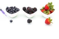 Γενετική τροποποίηση, βακκίνιο, βατόμουρο, φράουλα, φρούτα, Στοκ φωτογραφία με δικαίωμα ελεύθερης χρήσης