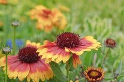 γενική ανθίζοντας άνοιξη κήπων λουλουδιών Στοκ Φωτογραφίες