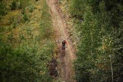 Γενικός αναβάτης σχεδίων ένας ποδηλάτης που οδηγά κατά μήκος ενός δασικού ίχνους Στοκ Φωτογραφία