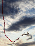 γενναίο κορίτσι bungee που παί&zeta Στοκ εικόνες με δικαίωμα ελεύθερης χρήσης