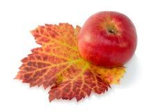 Γενναιόδωρα χρώματα του φθινοπώρου στοκ φωτογραφία με δικαίωμα ελεύθερης χρήσης