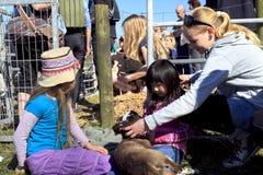 γεννημένα παιδιά που κρατούν το νέο κτύπημα αρνιών Στοκ Εικόνες