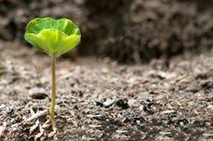 γεννημένο νέο φυτό στοκ φωτογραφία με δικαίωμα ελεύθερης χρήσης