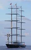 γεράκι Μαλτέζος Στοκ Φωτογραφία