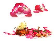 Γεράνι, πετούνια, ξηρά λεπτά λουλούδια, φύλλα και πέταλα των δημόσιων σχέσεων Στοκ Φωτογραφίες
