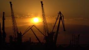 Γερανοί στο λιμένα στο ηλιοβασίλεμα Απογείωση στο υπόβαθρο ηλιοβασιλέματος απόθεμα βίντεο