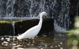 γερανός λευκός σαν το χι Στοκ εικόνα με δικαίωμα ελεύθερης χρήσης