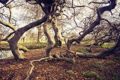 Γερμανία Αννόβερο Νότια Σαξωνία Χορεύοντας δέντρα στοκ φωτογραφίες με δικαίωμα ελεύθερης χρήσης