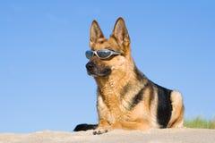 γερμανικά γυαλιά που βάζ&omi Στοκ Εικόνες