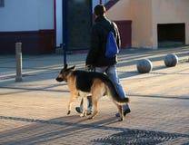 γερμανικά πρόβατα σκυλιών στοκ εικόνες