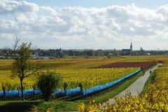 γερμανικά wineyards Στοκ Εικόνες