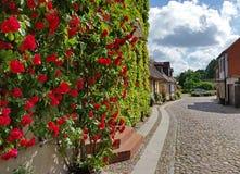 Γερμανικός όμορφος τοίχος πόλεων Wittstock/Dosse με τα τριαντάφυλλα Στοκ Φωτογραφία