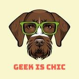 Γερμανικός Wirehaired δείκτης geek Έξυπνα γυαλιά backgrounds dog hunting labrador white yellow Drachaar διάνυσμα Στοκ φωτογραφία με δικαίωμα ελεύθερης χρήσης