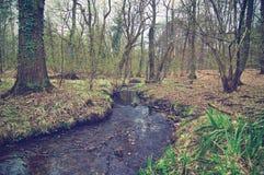 Γερμανικό δάσος Στοκ φωτογραφία με δικαίωμα ελεύθερης χρήσης