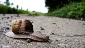 Γερμανικό σαλιγκάρι αμπέλων στοκ φωτογραφία με δικαίωμα ελεύθερης χρήσης