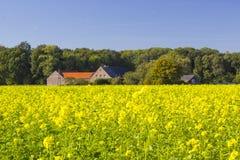 Γερμανικό τοπίο επαρχίας με τον κίτρινο τομέα canola Στοκ φωτογραφία με δικαίωμα ελεύθερης χρήσης