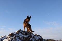 γερμανικό χιόνι ποιμένων σκυλιών Στοκ φωτογραφία με δικαίωμα ελεύθερης χρήσης
