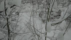 Γεροδεμένα τρεξίματα κατά μήκος του ίχνους στο χειμερινό δάσος απόθεμα βίντεο