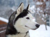 γεροδεμένος χειμώνας σ&kapp Στοκ Φωτογραφίες