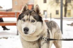 Γεροδεμένου και παλαιού πόλεων κέντρο σκυλιών, στοκ εικόνες