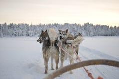 γεροδεμένο έλκηθρο σκ&upsilon Στοκ εικόνες με δικαίωμα ελεύθερης χρήσης