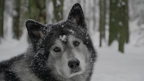 Γεροδεμένο να βρεθεί στη στροφή χιονιού μακριά και απότομα στροφές φιλμ μικρού μήκους