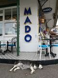 Γεροδεμένο σκυλί στο νησί των πριγκηπισσών στοκ εικόνα με δικαίωμα ελεύθερης χρήσης
