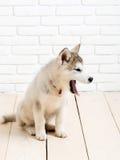 Γεροδεμένο σκυλί στο ξύλο με τα τούβλα Στοκ Εικόνα