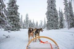 Γεροδεμένο σκυλιών στο Lapland Φινλανδία στοκ εικόνα με δικαίωμα ελεύθερης χρήσης