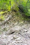 Γεωλογικά στρώματα στο δάσος Στοκ Εικόνες