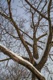 Γεωμετρία χιονιού Στοκ φωτογραφίες με δικαίωμα ελεύθερης χρήσης