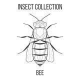 Γεωμετρικό εικονίδιο μελισσών Στοκ εικόνες με δικαίωμα ελεύθερης χρήσης