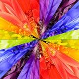 Γεωμετρικό σχέδιο κεντρικών κολάζ λουλουδιών ουράνιων τόξων Στοκ Φωτογραφίες