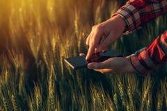 Γεωπόνος που χρησιμοποιεί το έξυπνο τηλέφωνο app για να αναλύσει την ανάπτυξη συγκομιδών Στοκ φωτογραφία με δικαίωμα ελεύθερης χρήσης